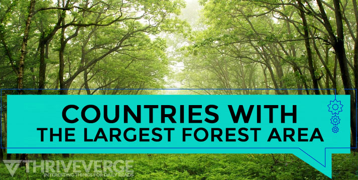 Largest Forest Area